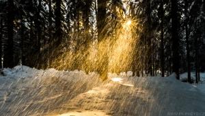 kouzlo zimy v lese