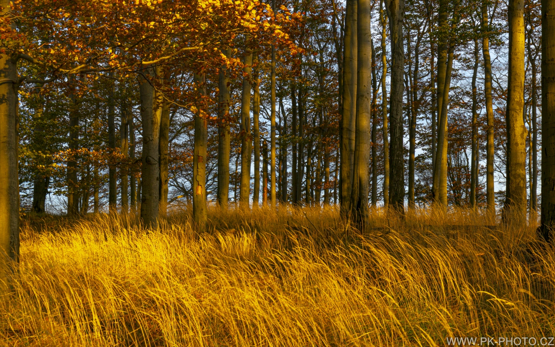 podzim v bučinách