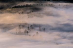 mlha, les a slunce
